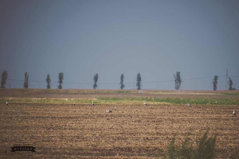 2014.08_Rumunia_0089